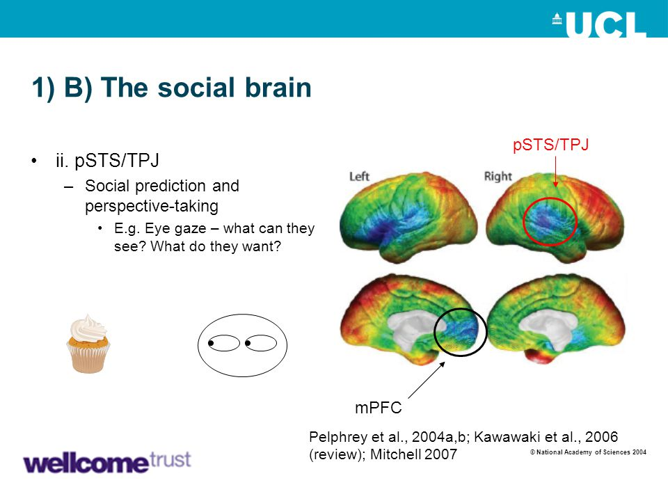 1) B) The social brain mPFC pSTS/TPJ ii. pSTS/TPJ –Social prediction and perspective-taking E.g. Eye gaze – what can they see? What do they want? Pelp