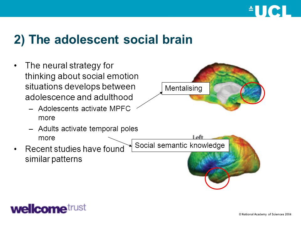 2) The adolescent social brain The neural strategy for thinking about social emotion situations develops between adolescence and adulthood –Adolescent