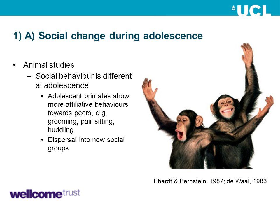 1) A) Social change during adolescence Animal studies –Social behaviour is different at adolescence Adolescent primates show more affiliative behaviou