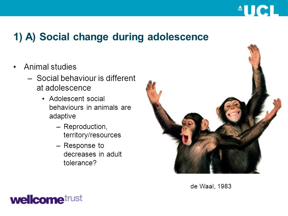 1) A) Social change during adolescence Animal studies –Social behaviour is different at adolescence Adolescent social behaviours in animals are adapti