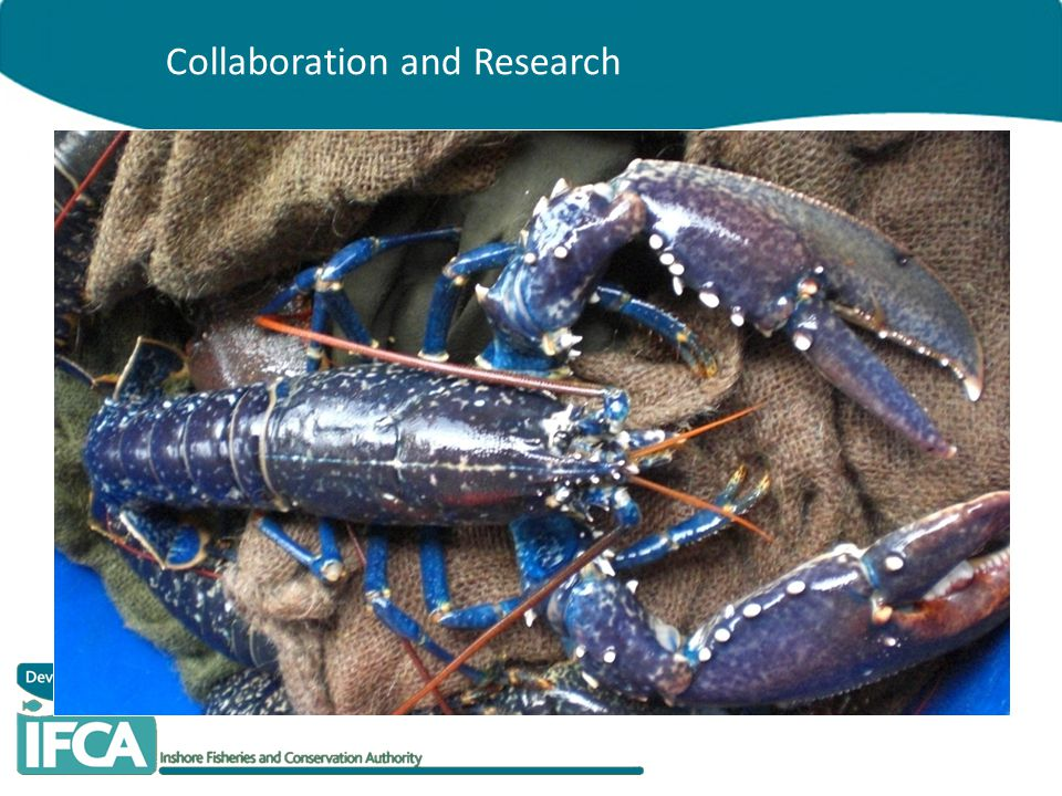Collaboration and Research