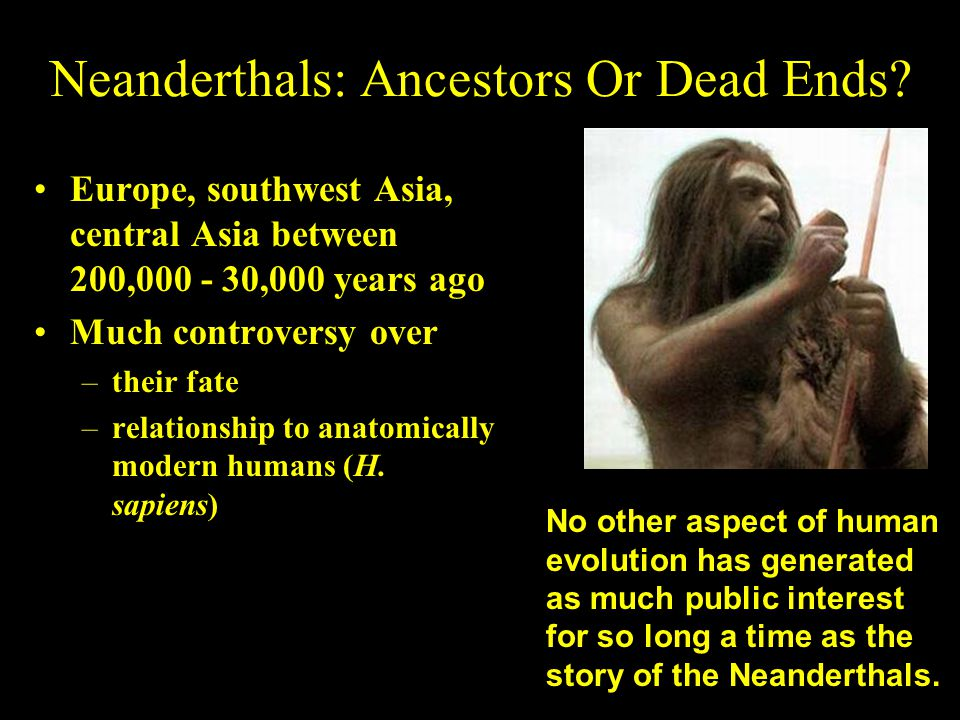 Neanderthals: Ancestors Or Dead Ends? Europe, southwest Asia, central Asia between 200,000 - 30,000 years ago Much controversy over –their fate –relat