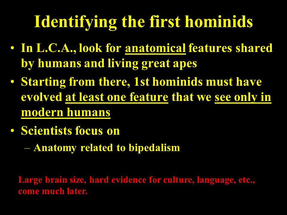 Identifying the first hominids In L.C.A., look for anatomical features shared by humans and living great apes Starting from there, 1st hominids must h