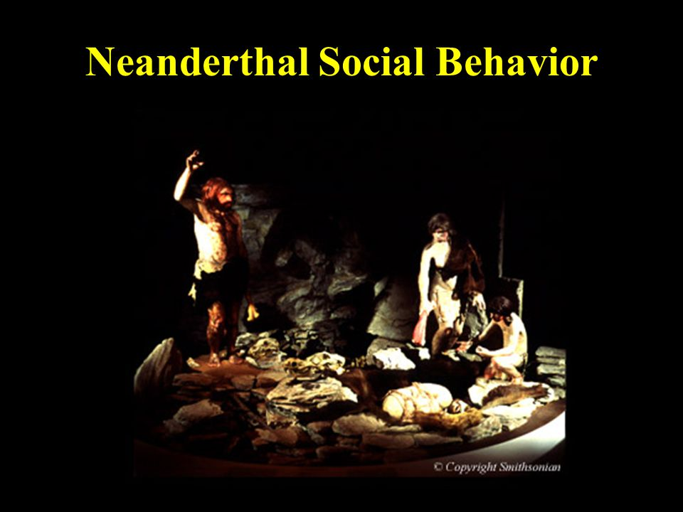 Neanderthal Social Behavior