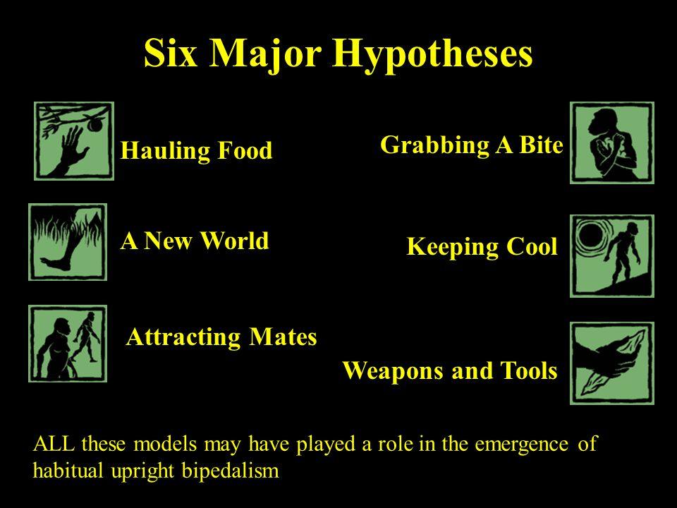Six Major Hypotheses Hauling Food A New World Attracting Mates Grabbing A Bite Keeping Cool Weapons and Tools ALL these models may have played a role