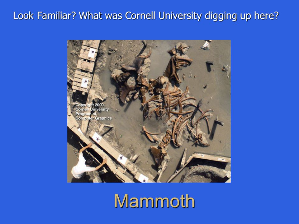 Mammoth Look Familiar? What was Cornell University digging up here?