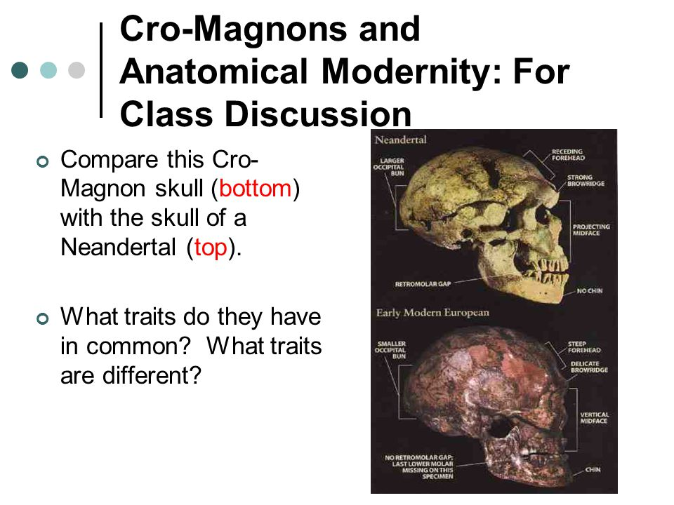 Cro-Magnons and Anatomical Modernity: For Class Discussion Compare this Cro- Magnon skull (bottom) with the skull of a Neandertal (top).
