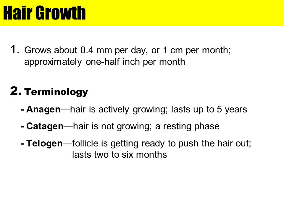 Hair Growth 1. Grows about 0.4 mm per day, or 1 cm per month; approximately one-half inch per month 2. Terminology - Anagen—hair is actively growing;