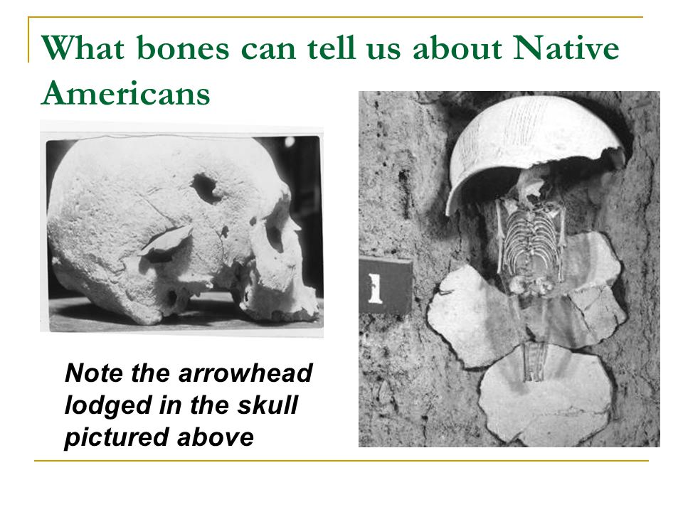 What bones can tell us about Native Americans Note the arrowhead lodged in the skull pictured above