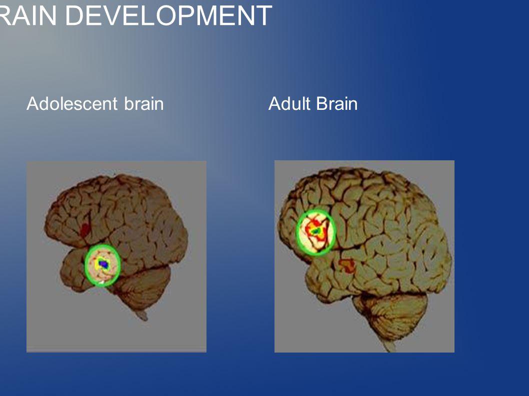 ADOLESCENT BRAIN DEVELOPMENT Adolescent brainAdult Brain