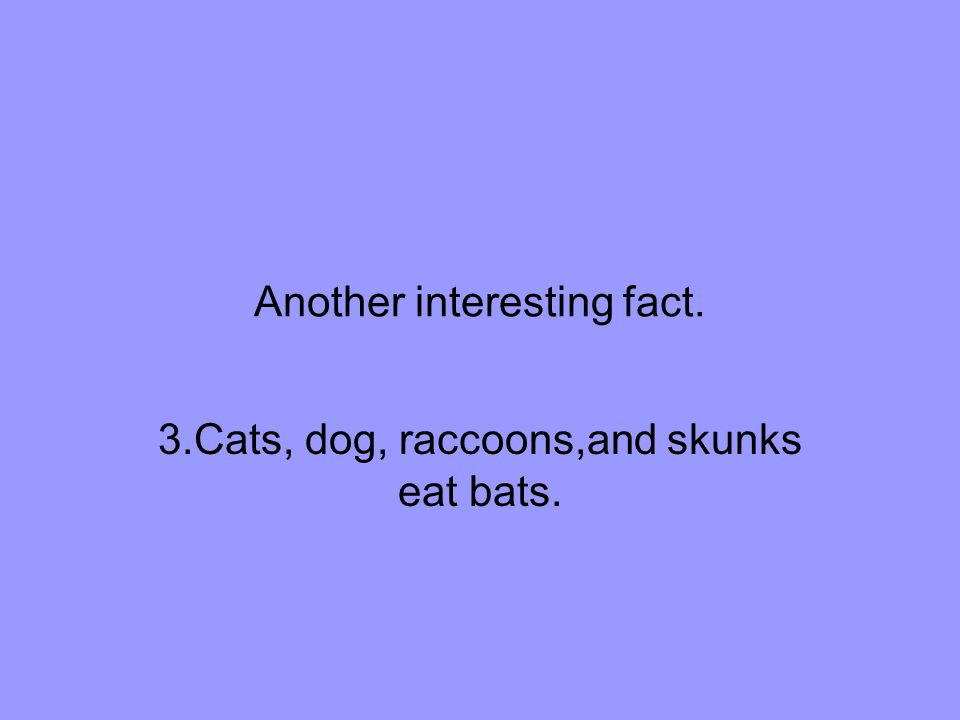 Another interesting fact. 3.Cats, dog, raccoons,and skunks eat bats.