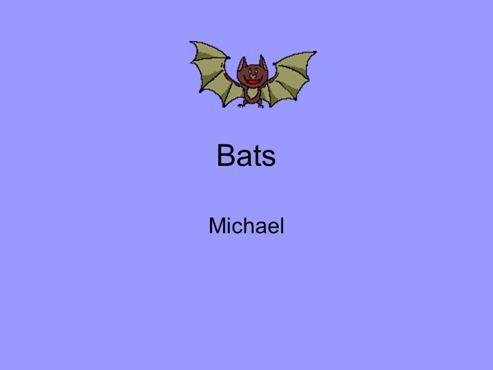 Bats Michael