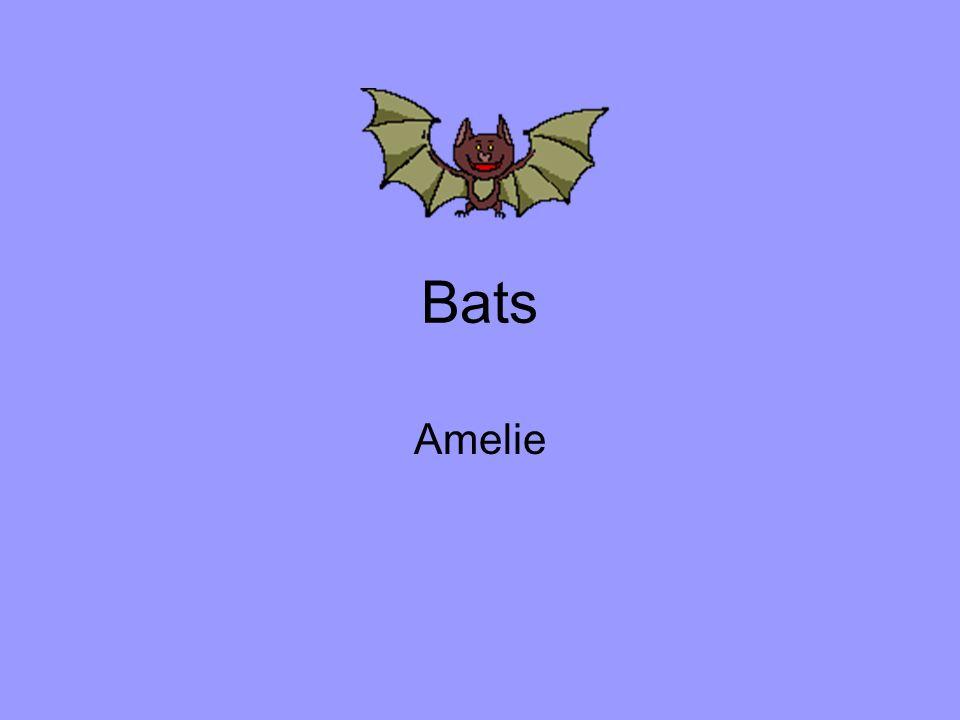 Bats Amelie