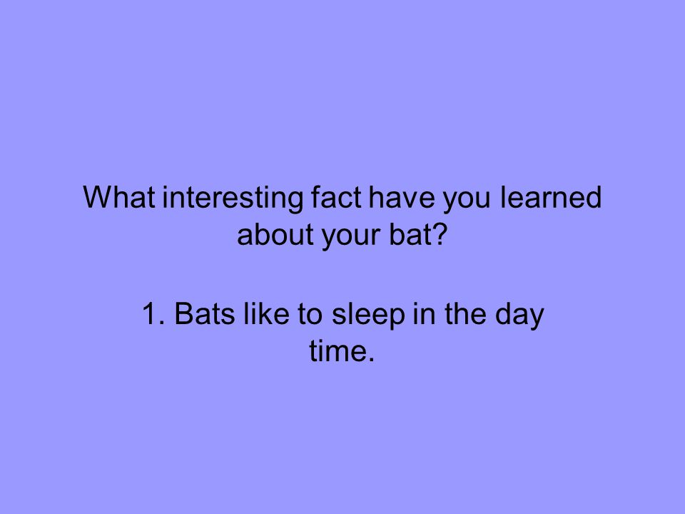 What interesting fact have you learned about your bat 1. Bats like to sleep in the day time.