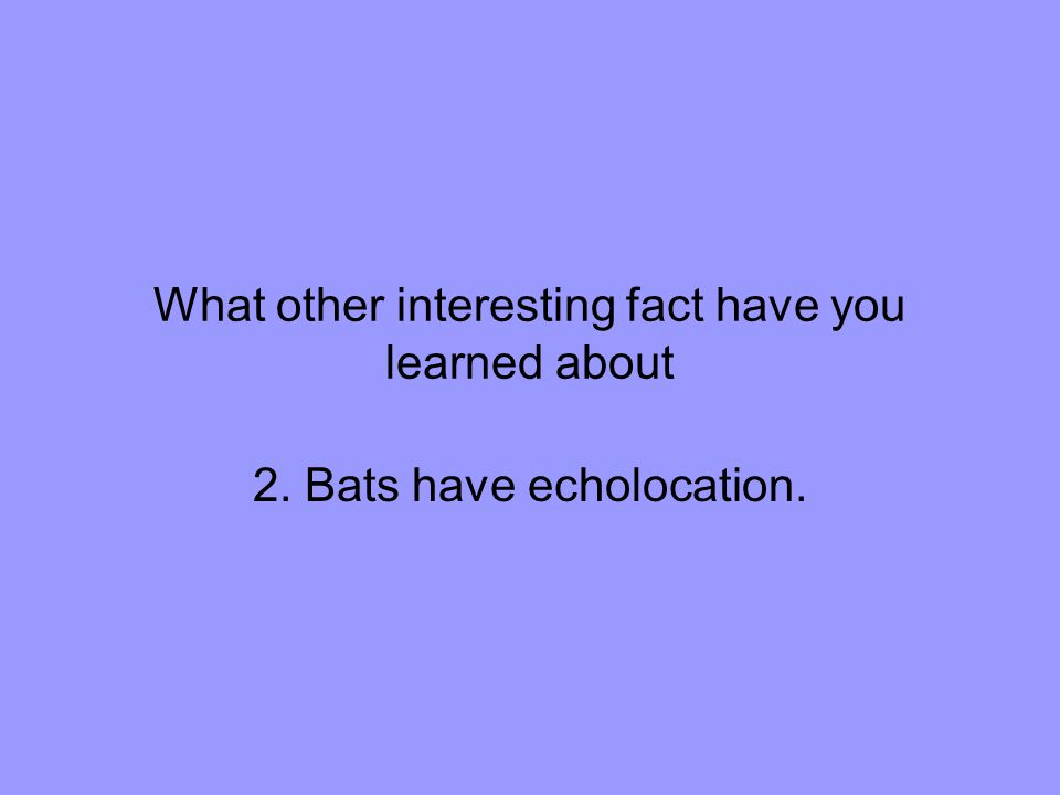 What other interesting fact have you learned about 2. Bats have echolocation.