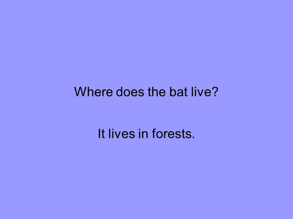 Where does the bat live It lives in forests.