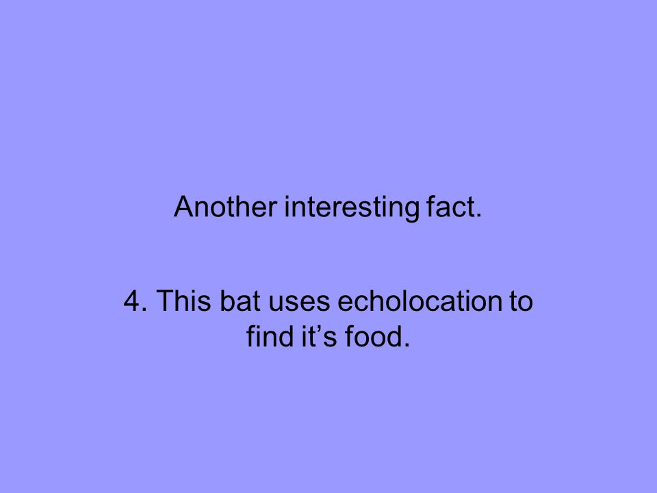 Another interesting fact. 4. This bat uses echolocation to find it's food.