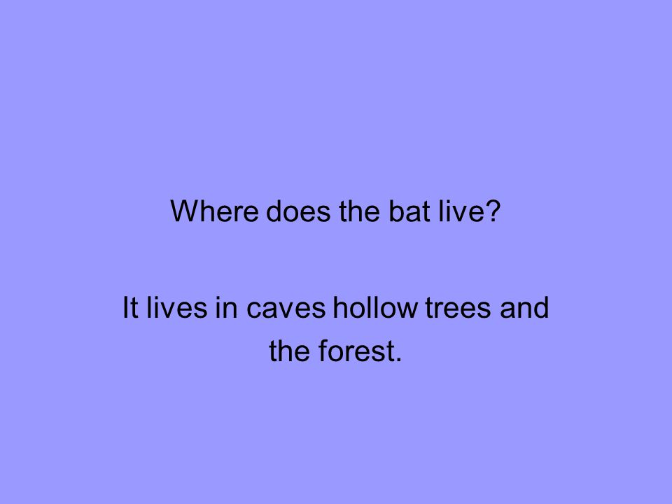 Where does the bat live It lives in caves hollow trees and the forest.
