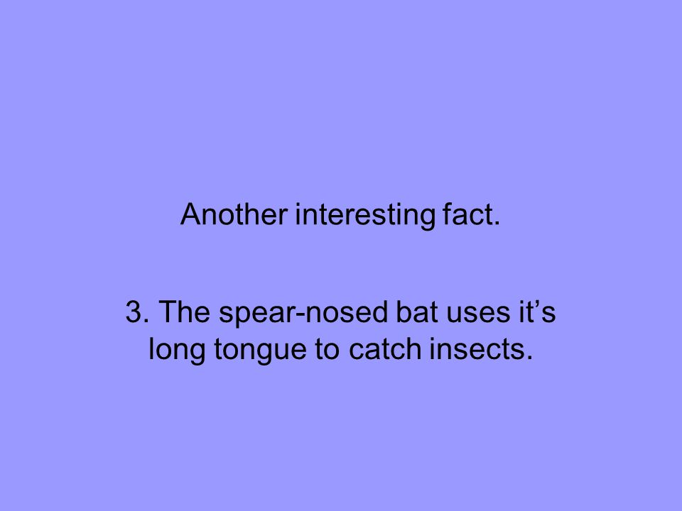 Another interesting fact. 3. The spear-nosed bat uses it's long tongue to catch insects.