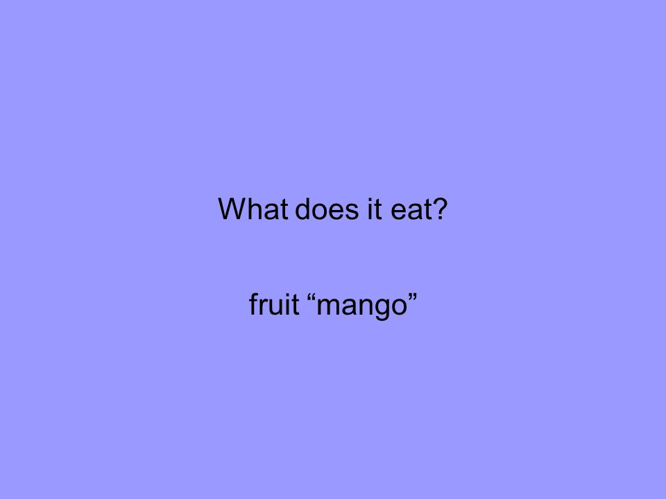 What does it eat fruit mango