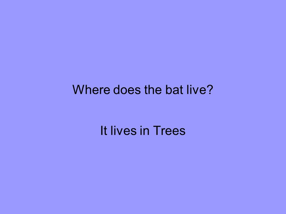 Where does the bat live It lives in Trees