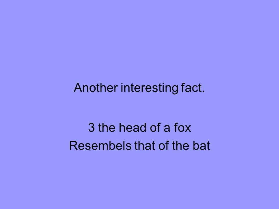 Another interesting fact. 3 the head of a fox Resembels that of the bat