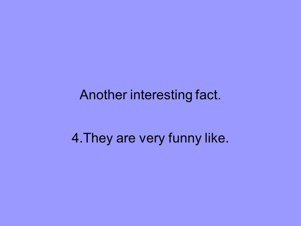 Another interesting fact. 4.They are very funny like.