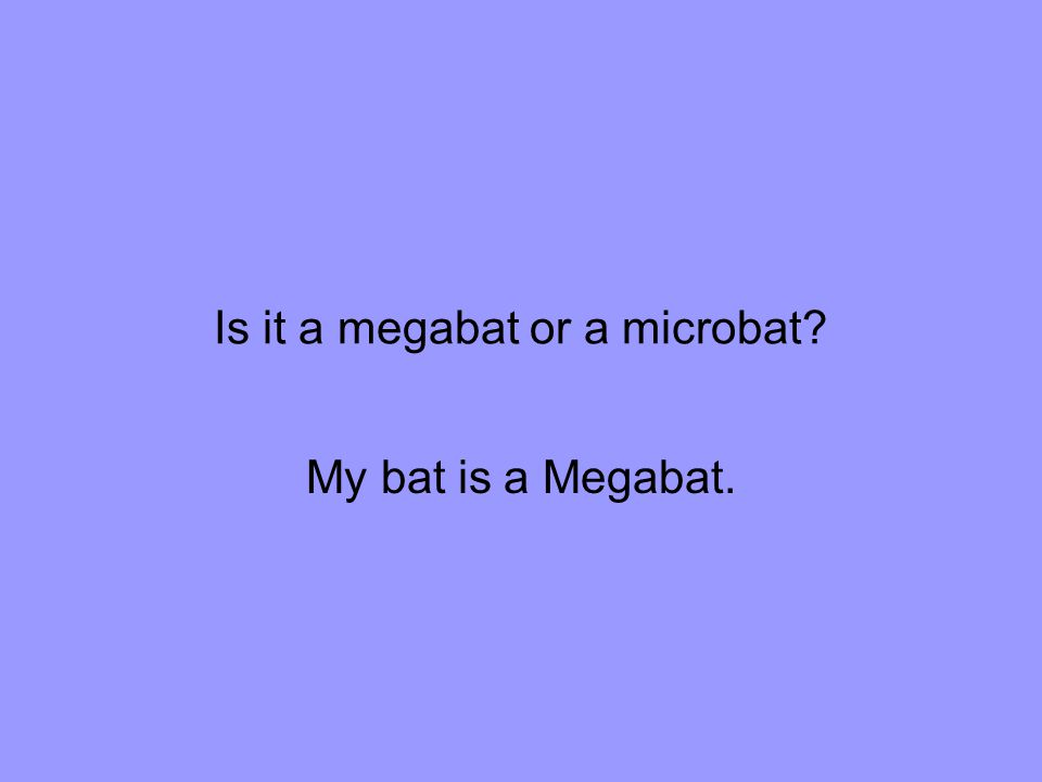 Is it a megabat or a microbat My bat is a Megabat.