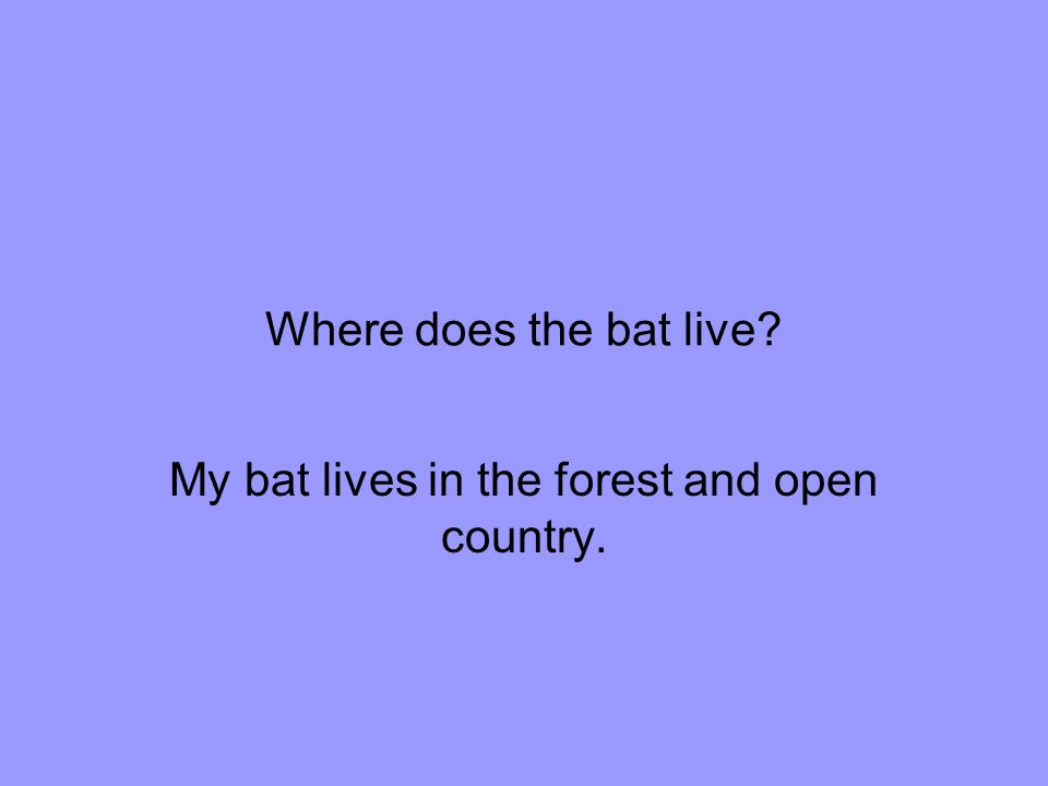 Where does the bat live My bat lives in the forest and open country.