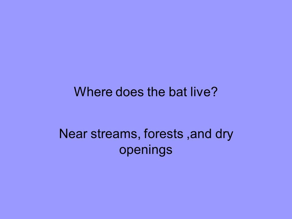 Where does the bat live Near streams, forests,and dry openings