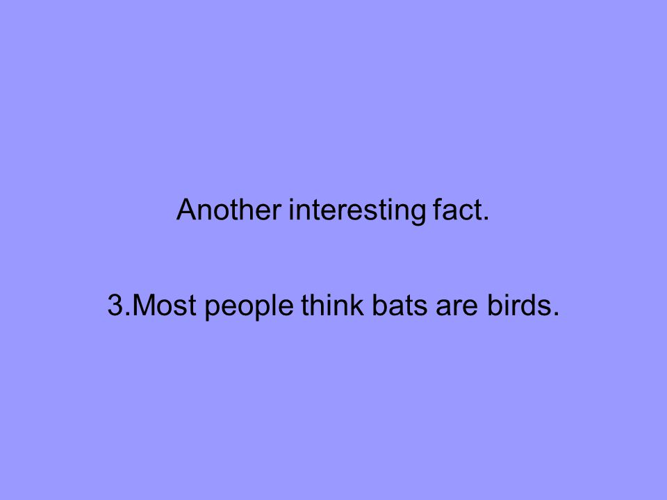 Another interesting fact. 3.Most people think bats are birds.