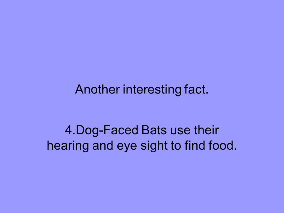Another interesting fact. 4.Dog-Faced Bats use their hearing and eye sight to find food.