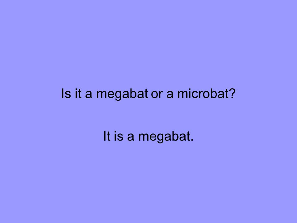 Is it a megabat or a microbat It is a megabat.
