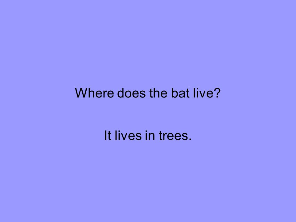 Where does the bat live It lives in trees.