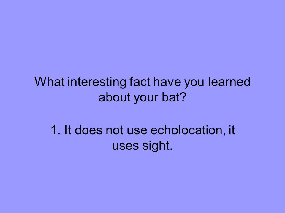 What interesting fact have you learned about your bat.