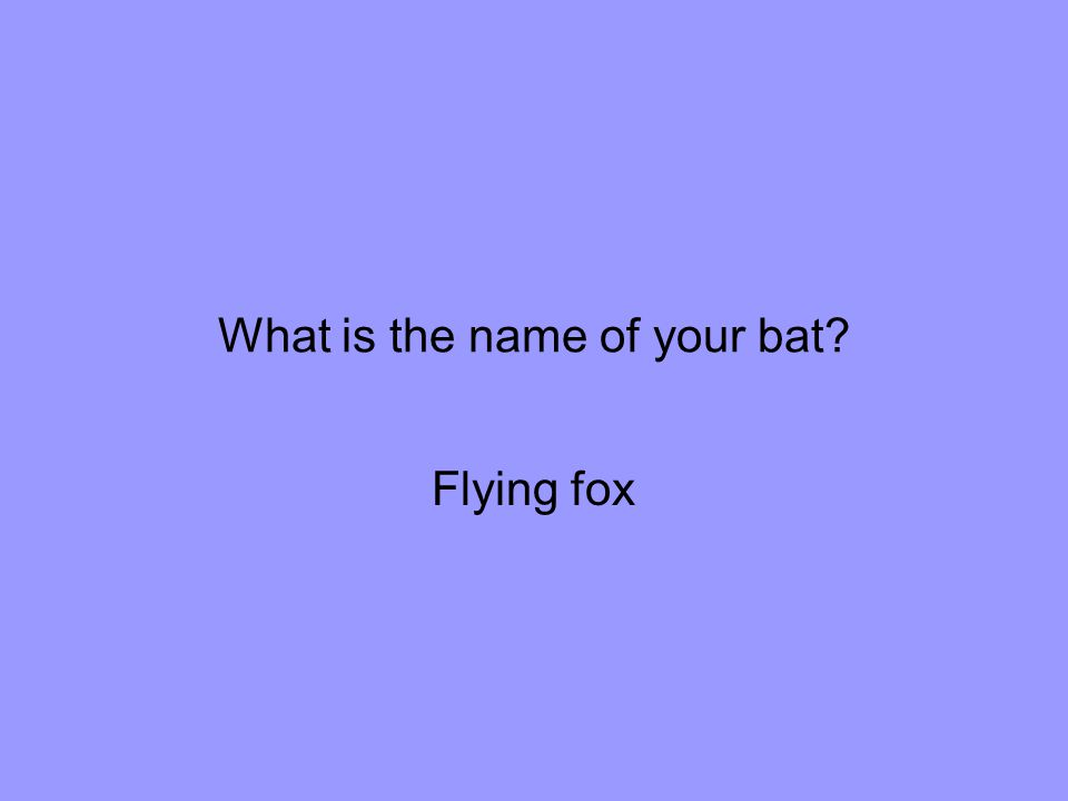 What is the name of your bat Flying fox