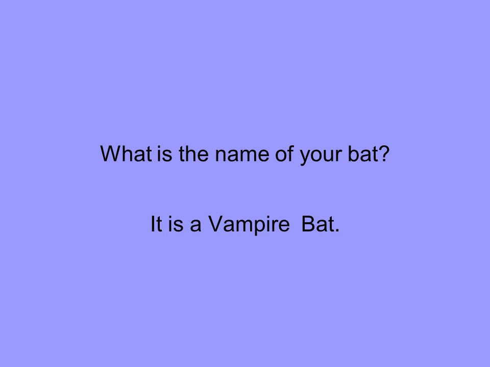 What is the name of your bat It is a Vampire Bat.