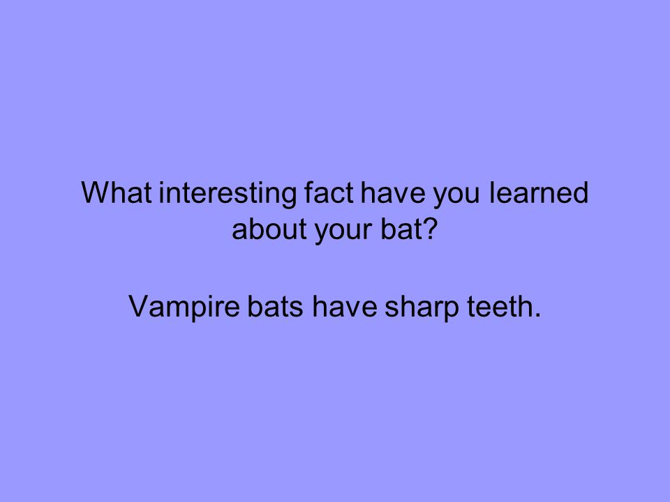 What interesting fact have you learned about your bat Vampire bats have sharp teeth.