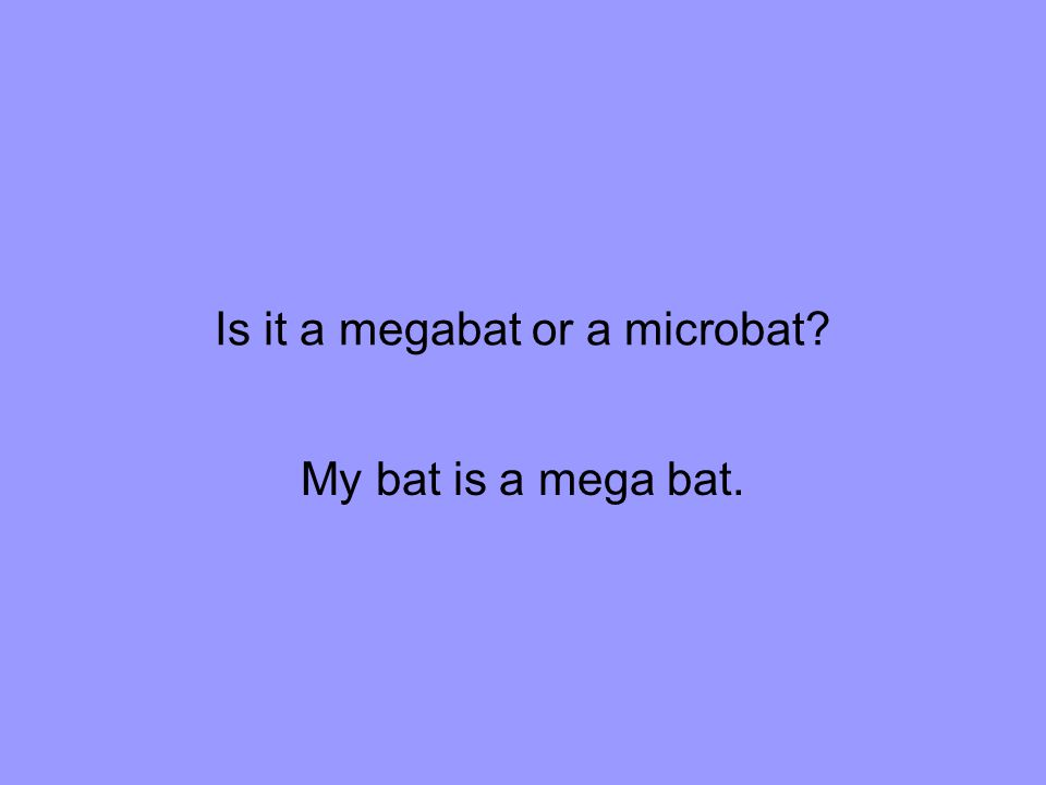 Is it a megabat or a microbat My bat is a mega bat.
