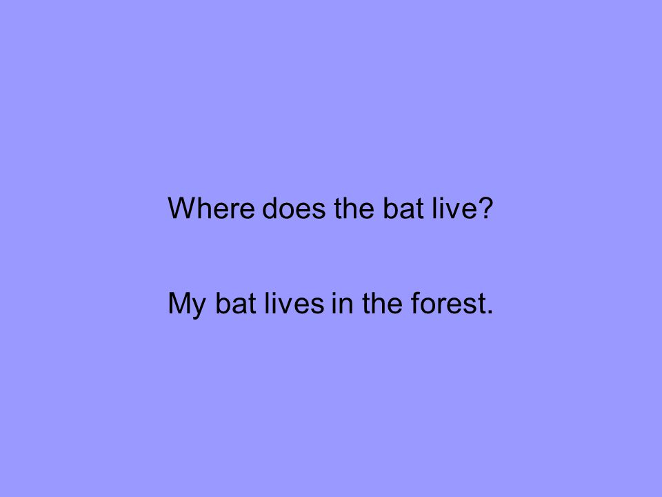 Where does the bat live My bat lives in the forest.