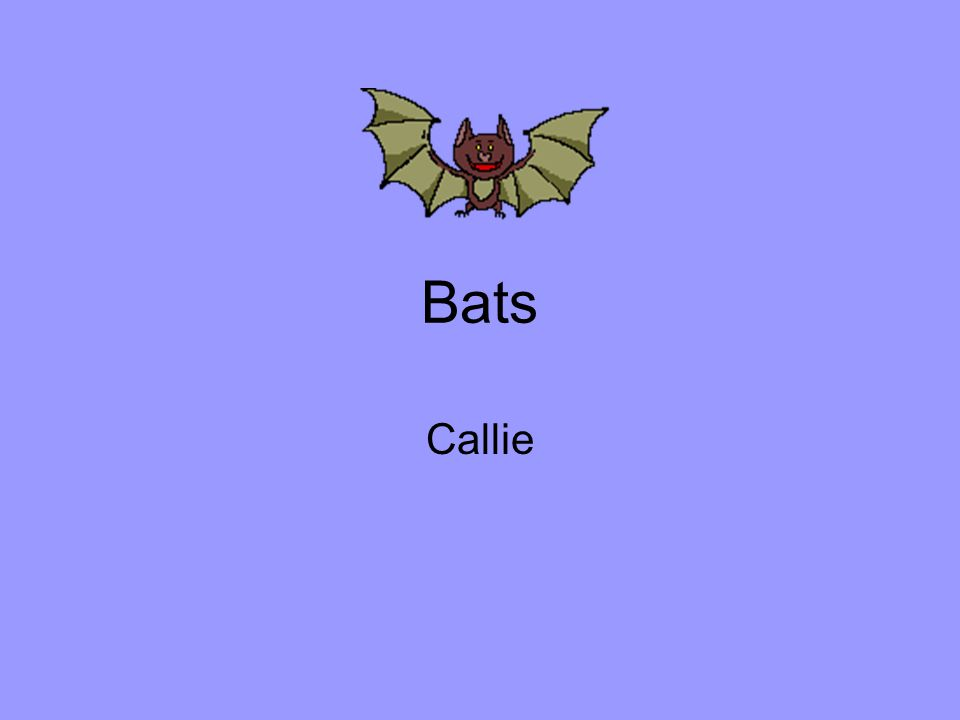 Bats Callie