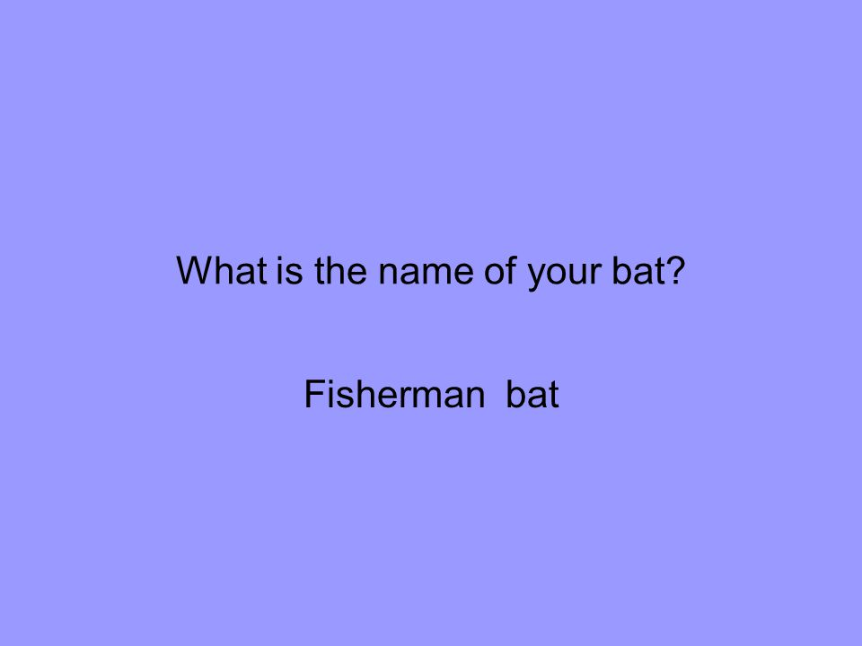 What is the name of your bat Fisherman bat