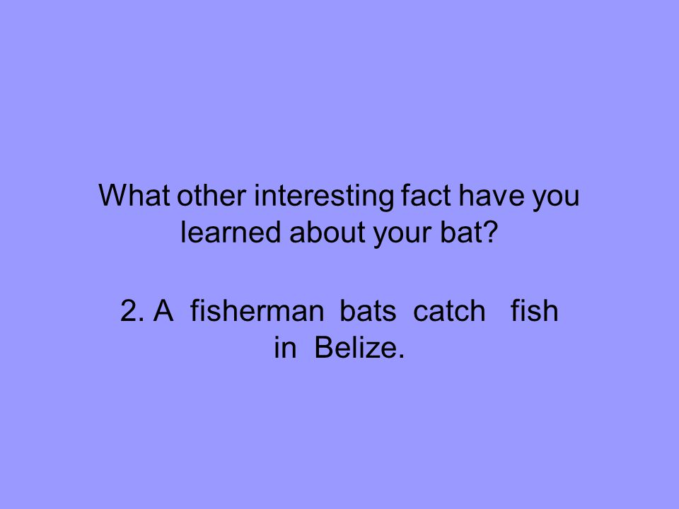 What other interesting fact have you learned about your bat.
