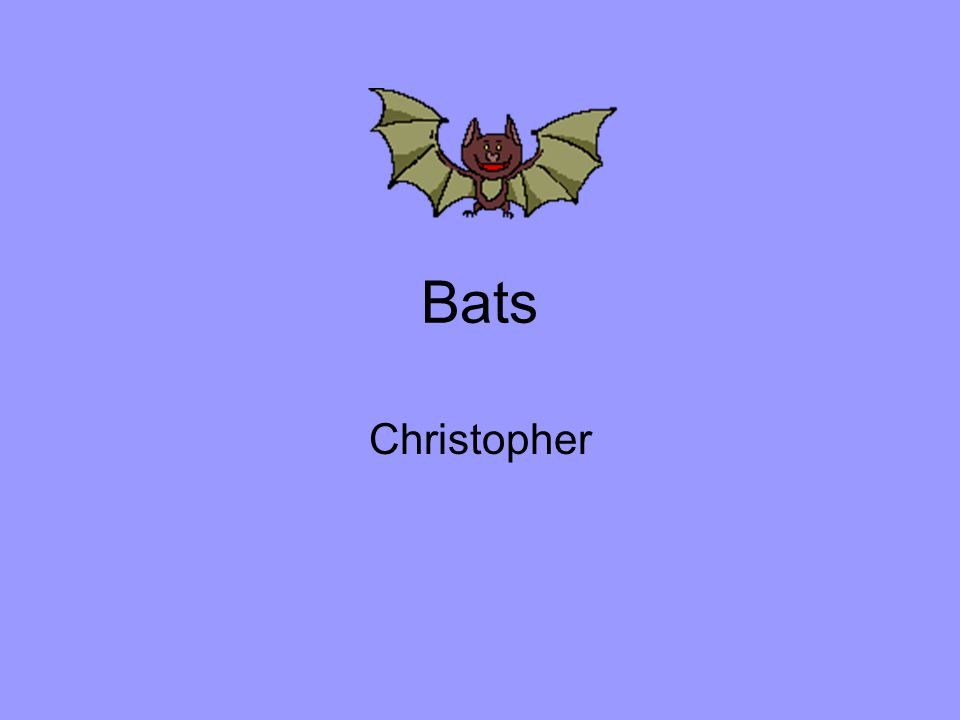 Bats Christopher