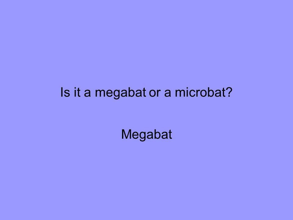 Is it a megabat or a microbat Megabat