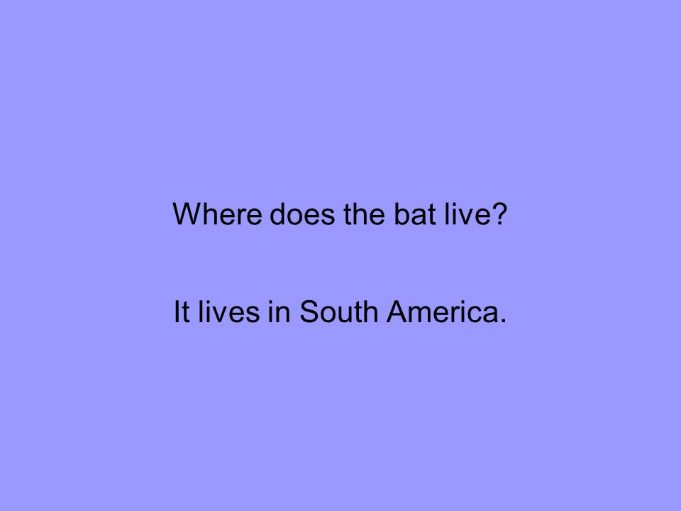 Where does the bat live It lives in South America.