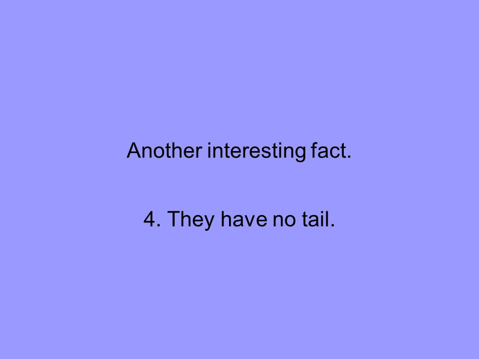 Another interesting fact. 4. They have no tail.