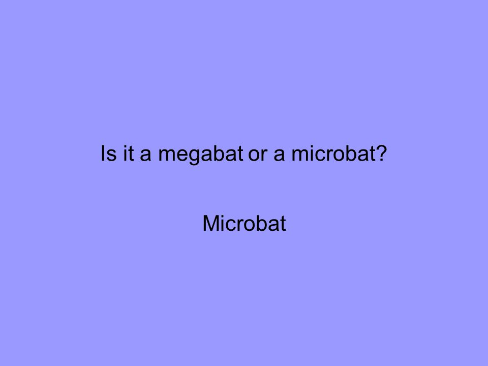 Is it a megabat or a microbat Microbat