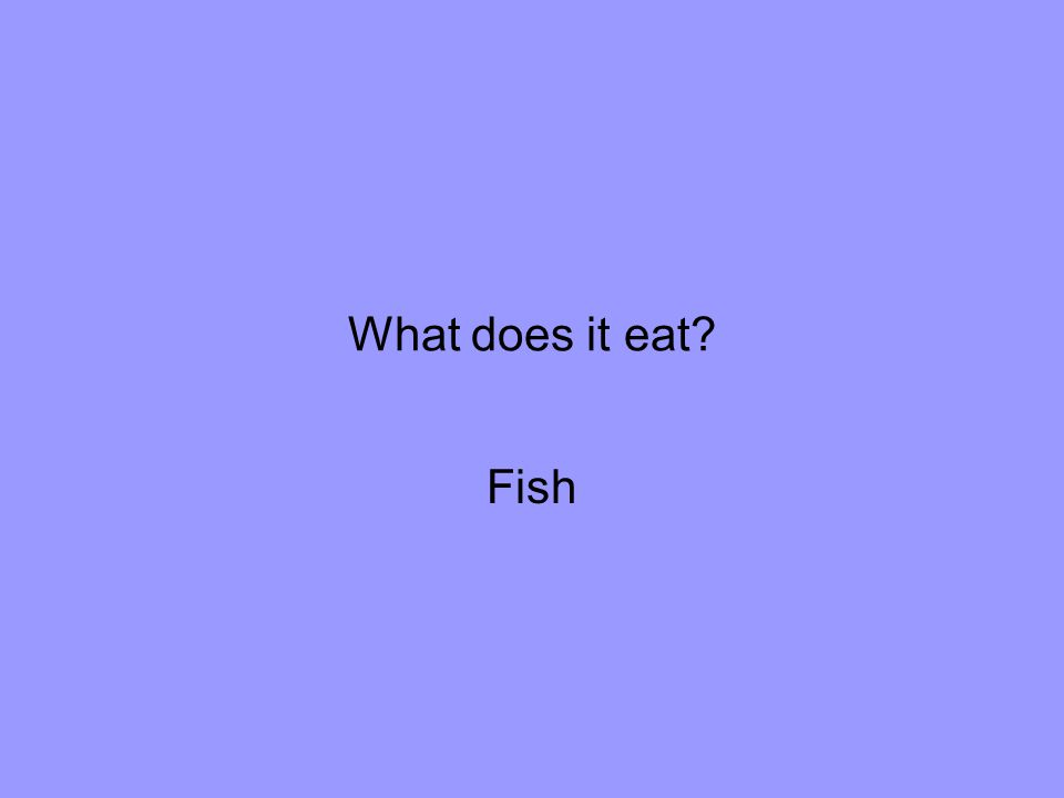 What does it eat Fish