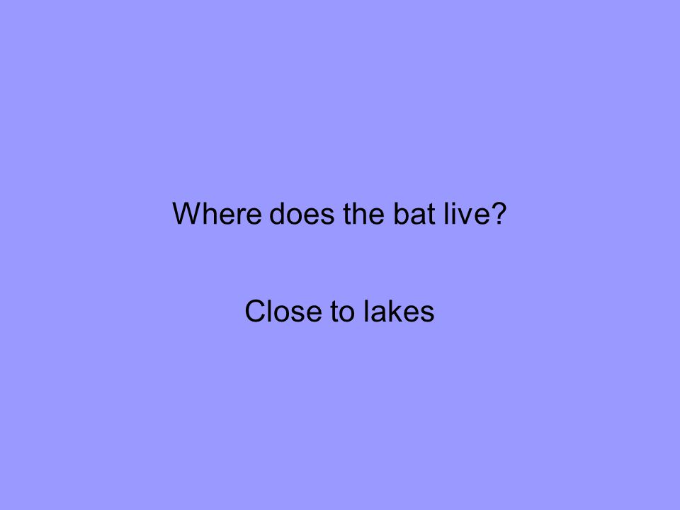 Where does the bat live Close to lakes